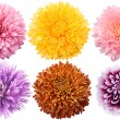 Set of dahlia flowers — Stock Photo