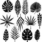 Tropical leaf — Stock Vector #2574263