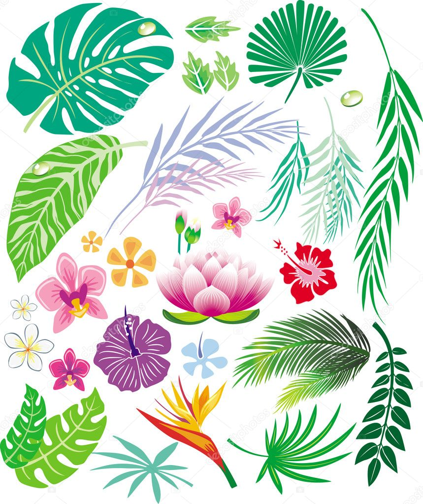 Tropical leaf and flowers — Stock Vector #2574430