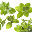 Green mint leaves — Stock Photo
