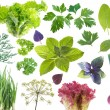 Salad leaves and herbs — Stock Photo