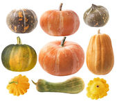 Set of pumpkins — Stock Photo