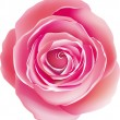 Pink rose — Vector de stock #2588174