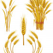 Stock Vector: Wheat