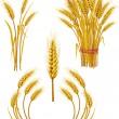 trigo — Vector de stock