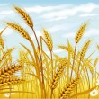 Wheat in the field — Vector de stock