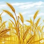 trigo en el campo — Vector de stock