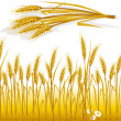 Stock Vector: Wheat in the field and spike of wheat