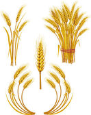 Wheat — Vettoriale Stock