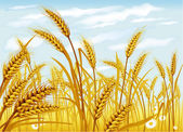 Wheat in the field — Stock Vector