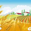 Stock Vector: Rural landscape with fields