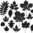 Set of silhouette leaf — Stock Vector