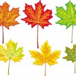 Colorful maple leaves collection — Stock Vector