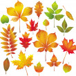 Colorful autumn leaves collection — Stock Vector