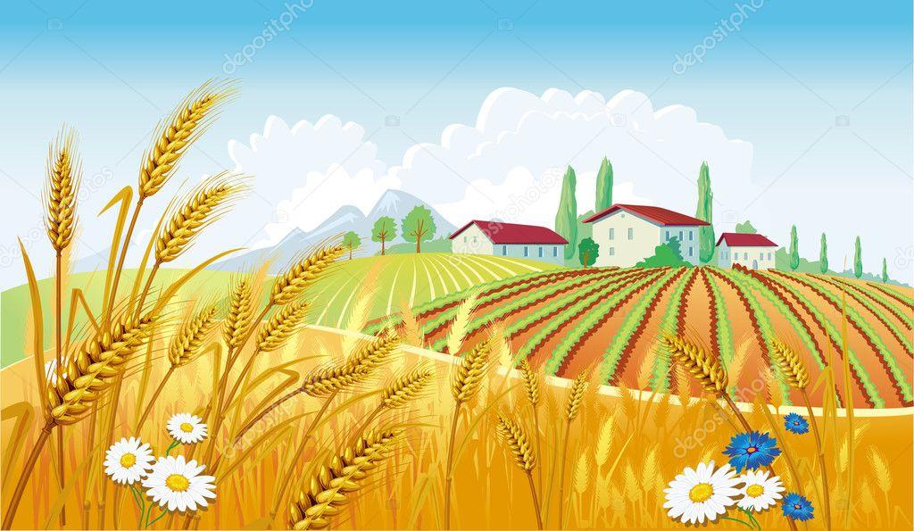 Field Landscape Vector Fields — Vector by Wikki33