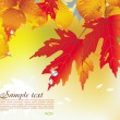 Background from autumn leaves — Imagen vectorial