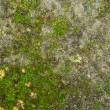 Stock Photo: Mossy stone