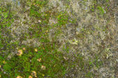 Mossy stone — Stock Photo