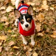 The small doggie costs in leaves in wood — Stock Photo #2610163