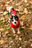 The small doggie costs in leaves in wood — Stock Photo