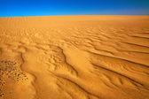 Colours of desert — Stock Photo