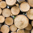 Birch fire wood - Stock Photo