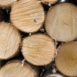 Birch fire wood — Stock Photo