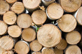 Birch fire wood — Stock Photo