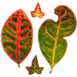 Stock Photo: Leafage