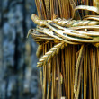 Stock Photo: Gold sheaf