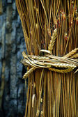 Gold sheaf — Stock Photo