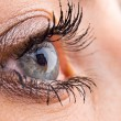 Stock Photo: Close-up of beautiful eye