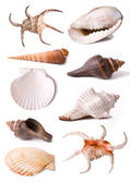 Sea shell collectie — Stockfoto