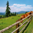 Horse, landscape — Stock Photo