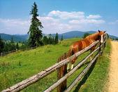 Horse, landscape — Stock Photo