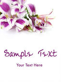 White and Purple flowers card background — Stock Photo