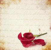 红玫瑰复古卡 — 图库照片