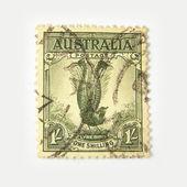 Australia postage stamp with lyrebird — Stock Photo