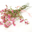 Bouquet of little pink flowers - Stock Photo