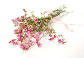 Bouquet of little pink flowers — Stock Photo