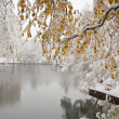 Stock Photo: Winter city landscape with pond