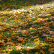 Stock Photo: Bright autumn leaves