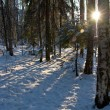 Stock Photo: Winter landscape with sun