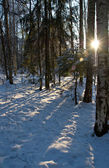 Winter landscape with the sun — Stock Photo
