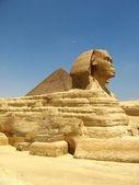 Egyptian sphinx — Stock Photo