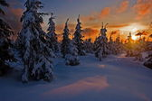 Sunset in the snowy landscape — Stock Photo