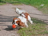 Dog with ball in moving — Stock Photo