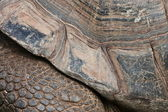 Detail legs and turtle carapace elephant — Stock Photo