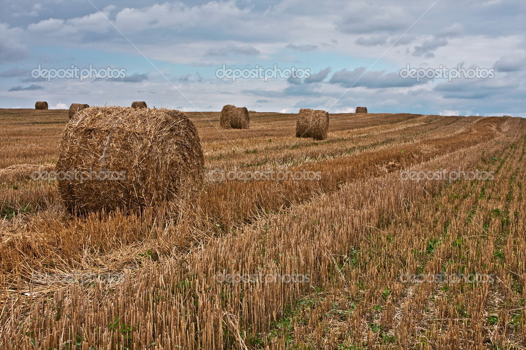 field at the end of summer — Stock Photo #2457782