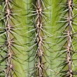 Royalty-Free Stock Photo: Very dangerous, detail of cactus